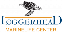 Loggerhead Marinelife Center TurtleFest